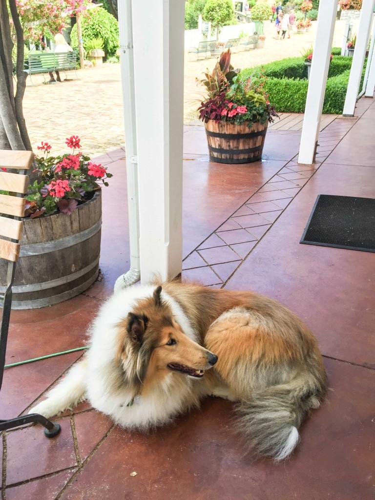 Lassie-